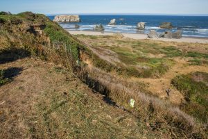 gorse removal site Coquille Point