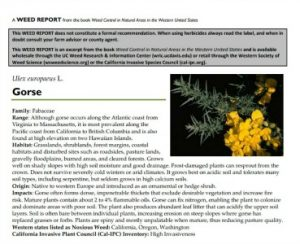 Gorse Weed Report